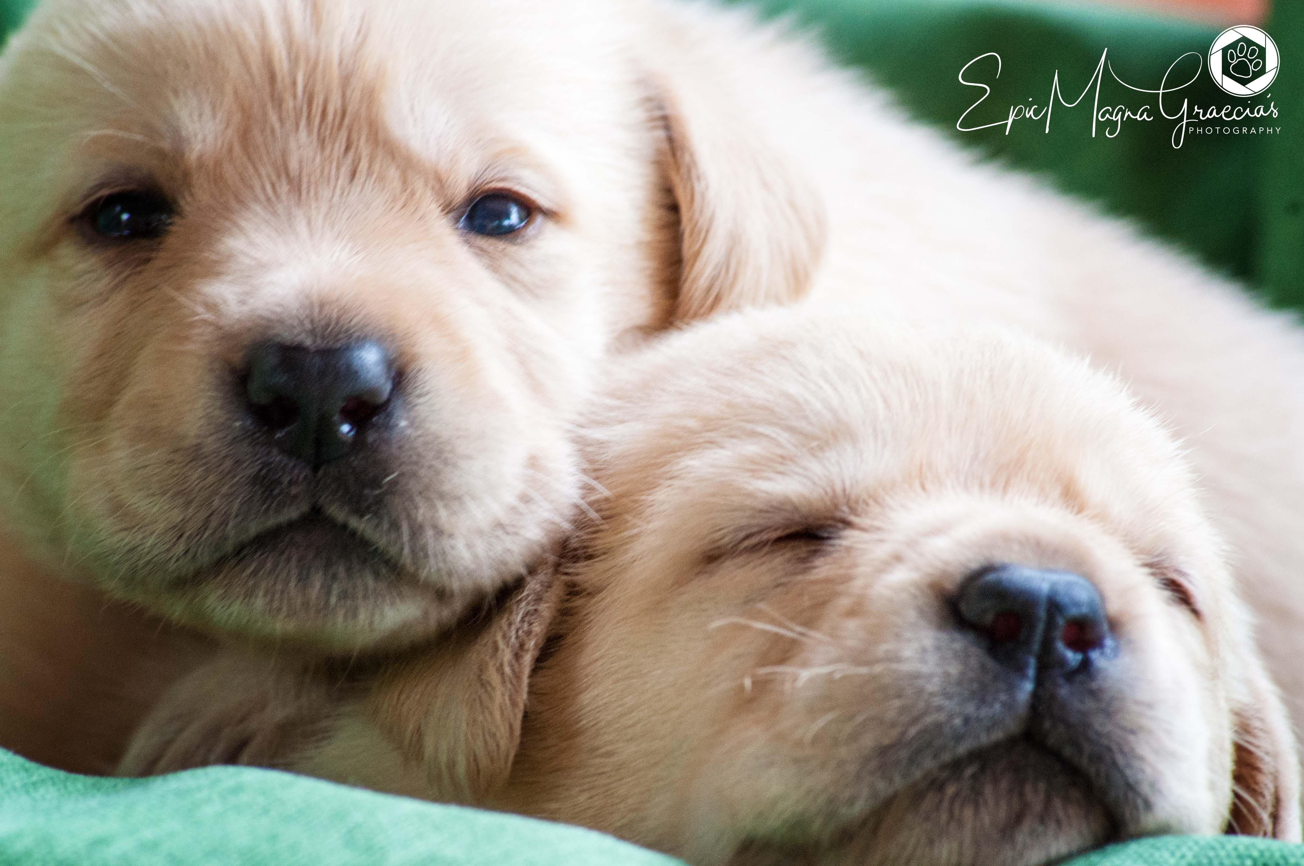 Sono nati i Cuccioli!